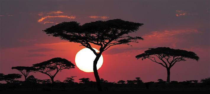 Sehnsucht Afrika